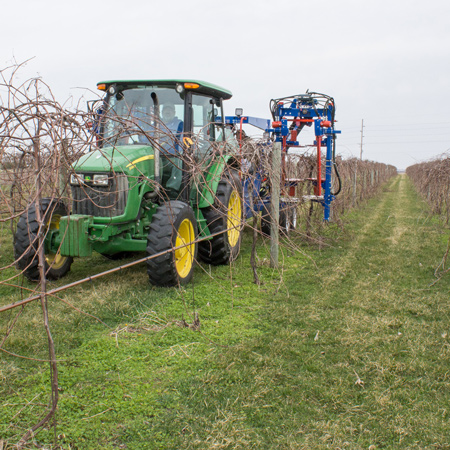 pruning, Iowa vineyard, machine prune