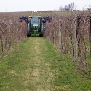 vine pruning, iowa vineyard, iowa wines
